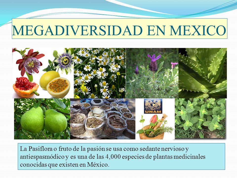 MEGADIVERSIDAD EN MEXICO La Pasiflora o fruto de la pasión se usa como sedante nervioso y antiespasmódico y es una de las 4,000 especies de plantas me