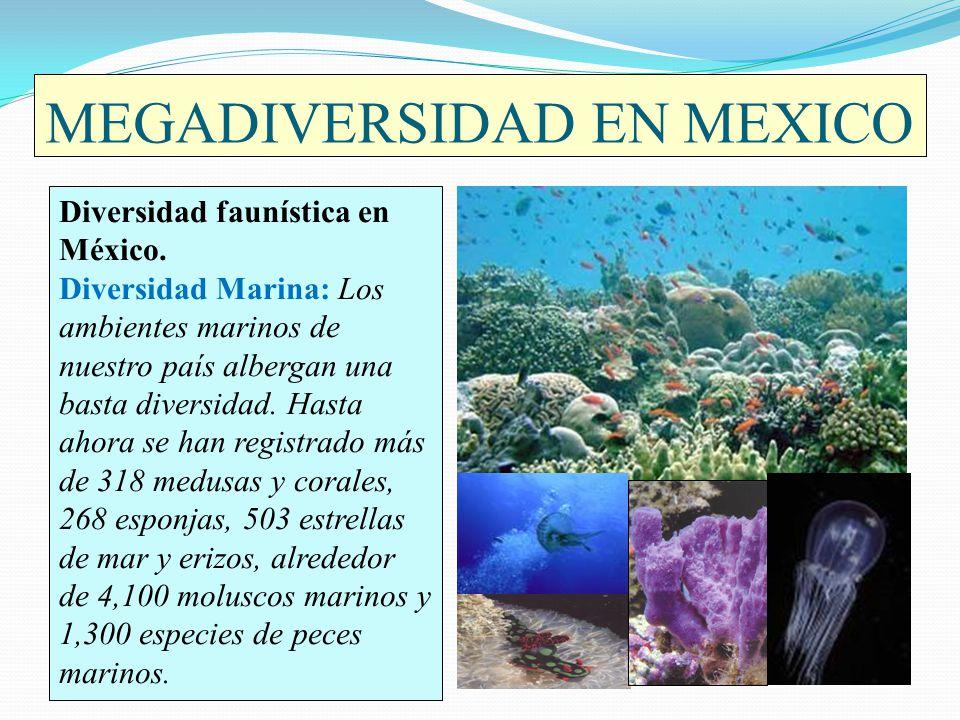 MEGADIVERSIDAD EN MEXICO Diversidad faunística en México. Diversidad Marina: Los ambientes marinos de nuestro país albergan una basta diversidad. Hast