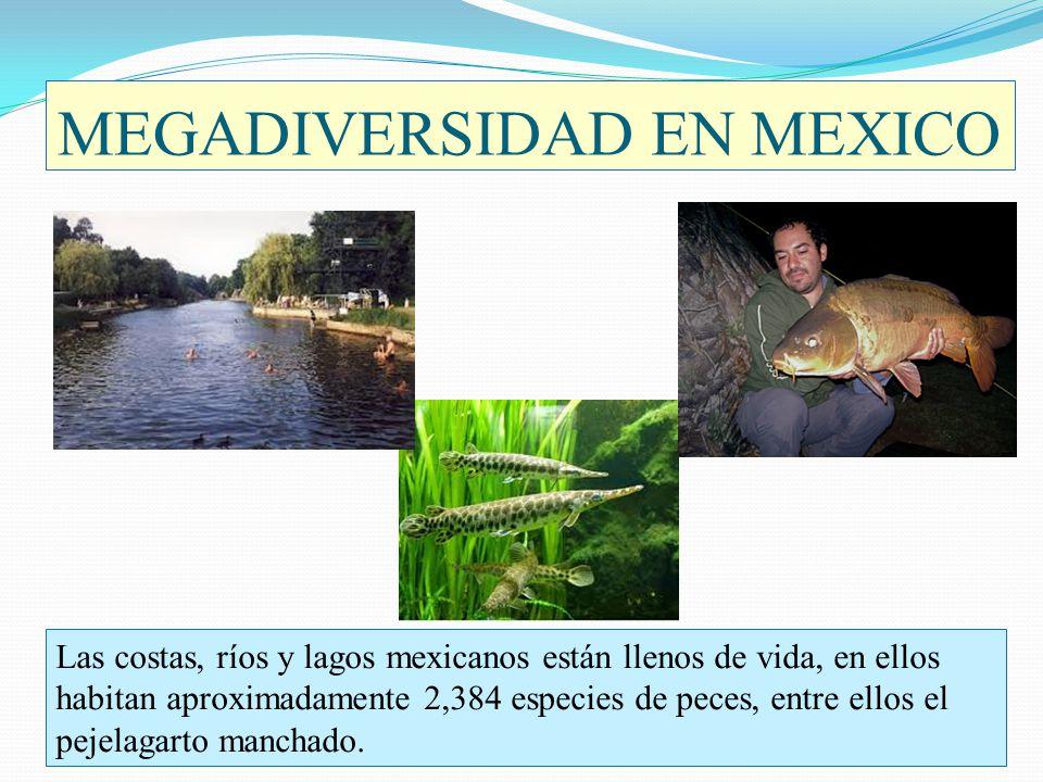 MEGADIVERSIDAD EN MEXICO Las costas, ríos y lagos mexicanos están llenos de vida, en ellos habitan aproximadamente 2,384 especies de peces, entre ello