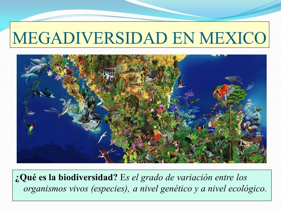 MEGADIVERSIDAD EN MEXICO ¿Qué es la biodiversidad? Es el grado de variación entre los organismos vivos (especies), a nivel genético y a nivel ecológic