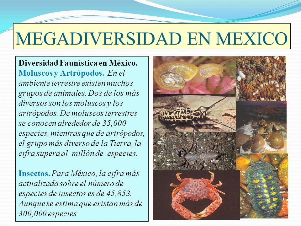 MEGADIVERSIDAD EN MEXICO Diversidad Faunística en México. Moluscos y Artrópodos. En el ambiente terrestre existen muchos grupos de animales. Dos de lo