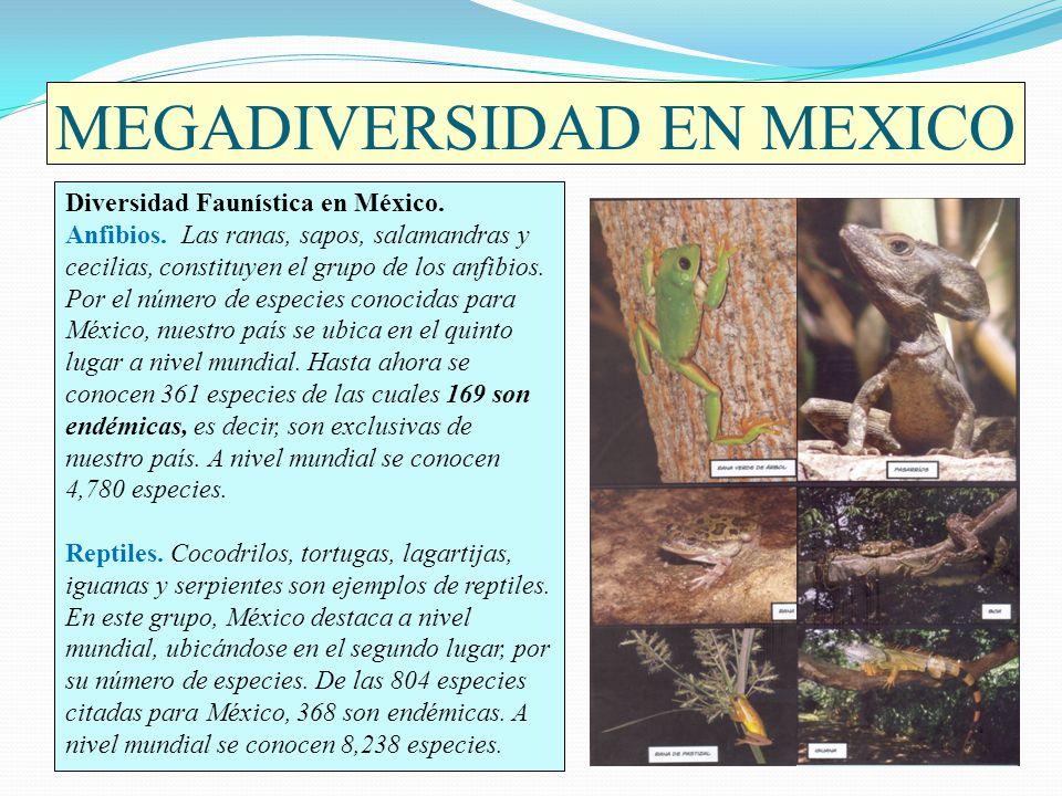 MEGADIVERSIDAD EN MEXICO Diversidad Faunística en México. Anfibios. Las ranas, sapos, salamandras y cecilias, constituyen el grupo de los anfibios. Po