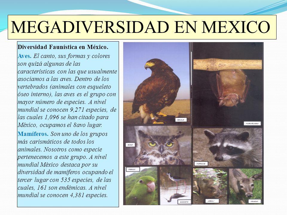 Diversidad Faunística en México. Aves. El canto, sus formas y colores son quizá algunas de las características con las que usualmente asociamos a las
