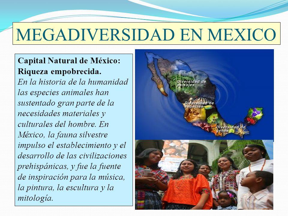 MEGADIVERSIDAD EN MEXICO Capital Natural de México: Riqueza empobrecida. En la historia de la humanidad las especies animales han sustentado gran part