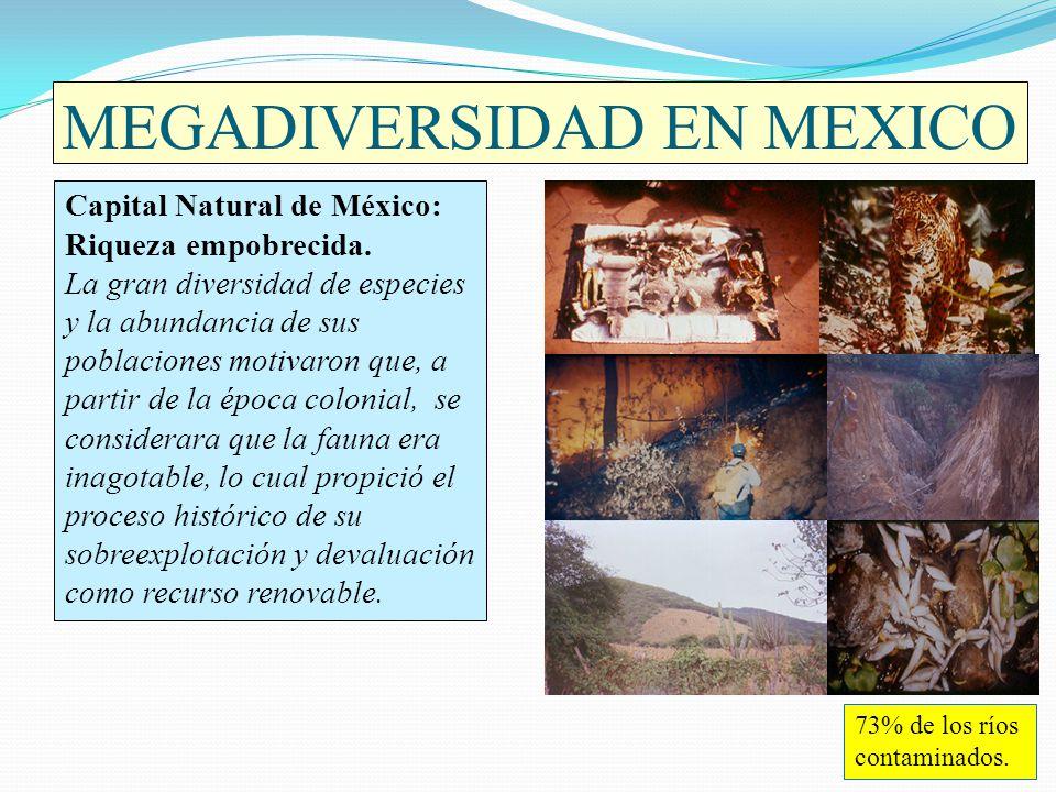 MEGADIVERSIDAD EN MEXICO Capital Natural de México: Riqueza empobrecida. La gran diversidad de especies y la abundancia de sus poblaciones motivaron q