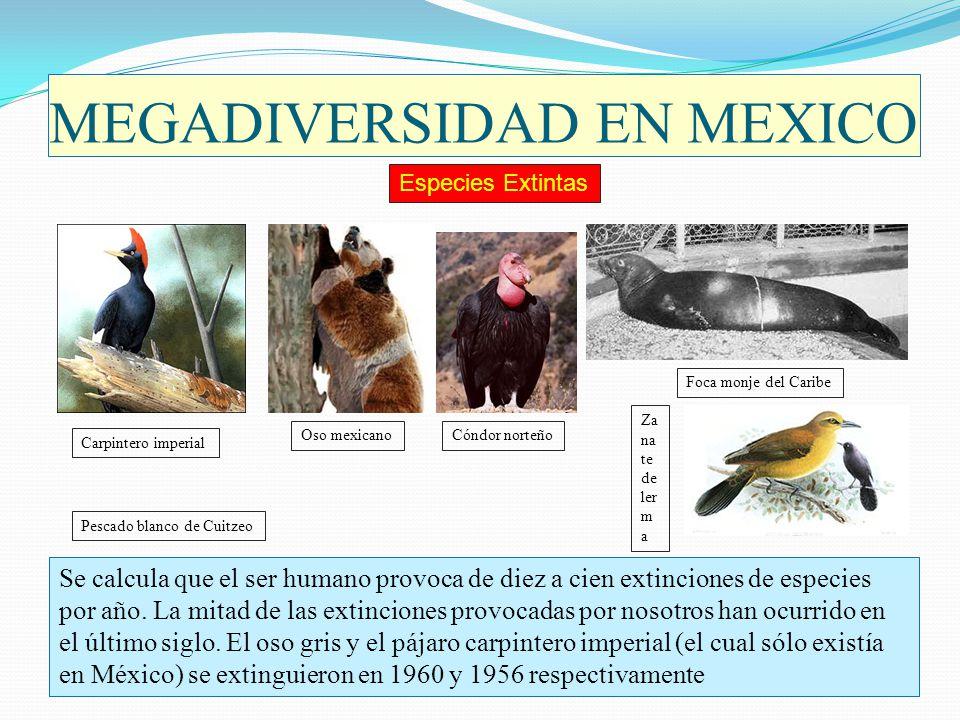 MEGADIVERSIDAD EN MEXICO Se calcula que el ser humano provoca de diez a cien extinciones de especies por año. La mitad de las extinciones provocadas p