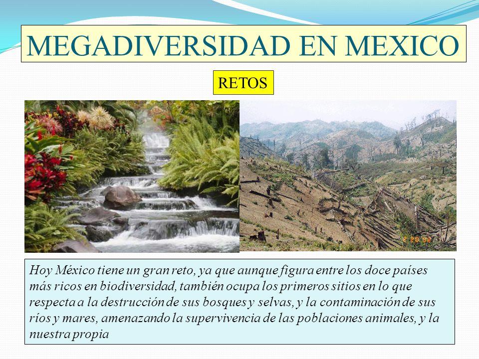 MEGADIVERSIDAD EN MEXICO Hoy México tiene un gran reto, ya que aunque figura entre los doce países más ricos en biodiversidad, también ocupa los prime