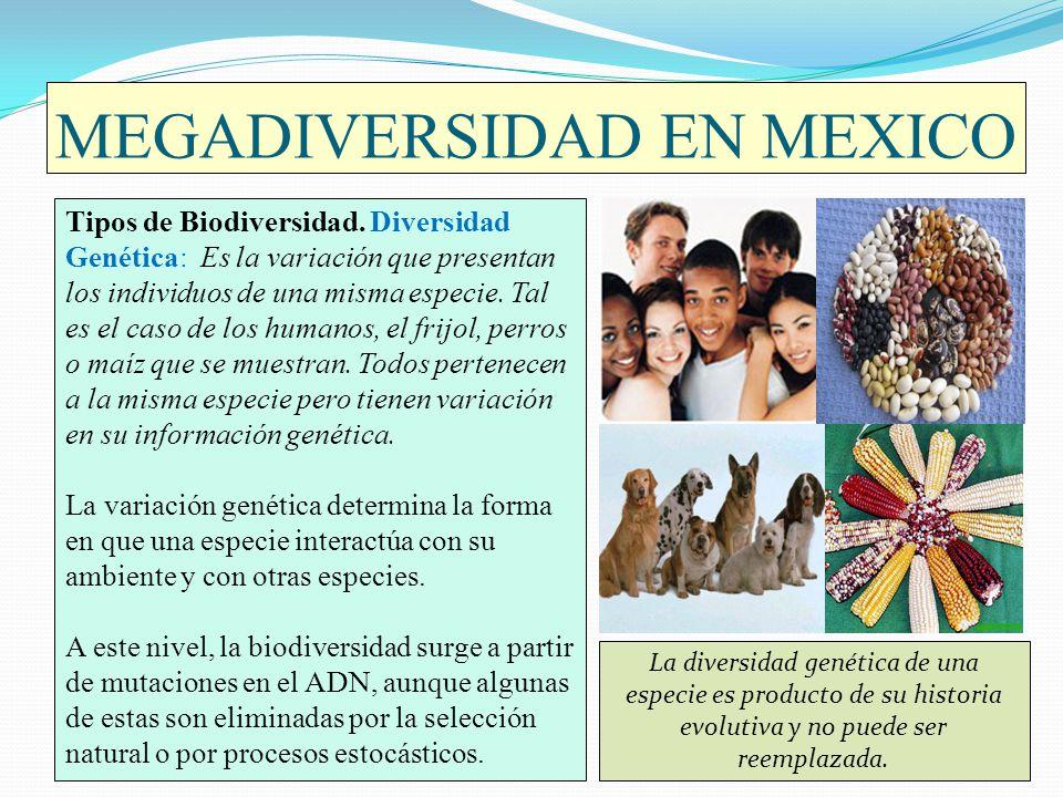 MEGADIVERSIDAD EN MEXICO Tipos de Biodiversidad. Diversidad Genética: Es la variación que presentan los individuos de una misma especie. Tal es el cas