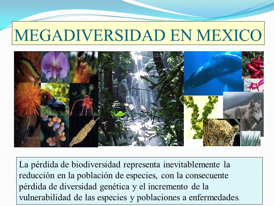 MEGADIVERSIDAD EN MEXICO La pérdida de biodiversidad representa inevitablemente la reducción en la población de especies, con la consecuente pérdida d