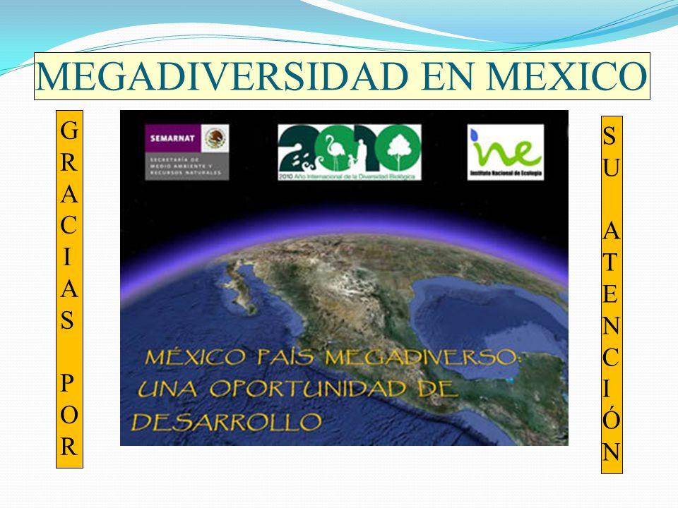 MEGADIVERSIDAD EN MEXICO GRACIAS PORGRACIAS POR SU ATENCIÓNSU ATENCIÓN