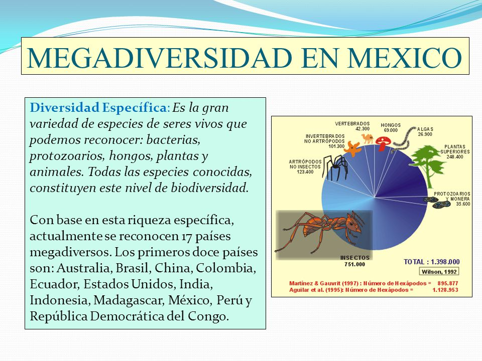MEGADIVERSIDAD EN MEXICO Diversidad Específica: Es la gran variedad de especies de seres vivos que podemos reconocer: bacterias, protozoarios, hongos,