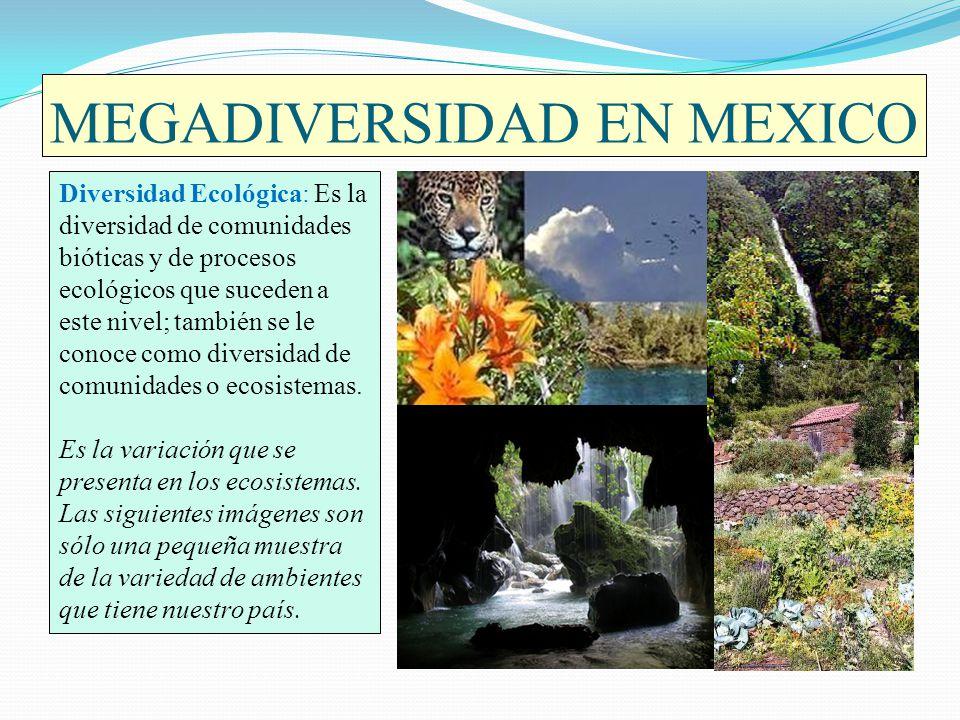 MEGADIVERSIDAD EN MEXICO México es el centro de diversidad tanto de pinos como de encinos con más del 50 % de todas las especies de pino y más de 150 especies de encinos del planeta.