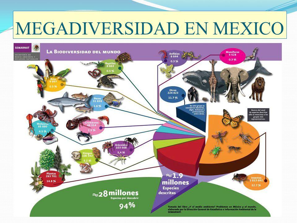 MEGADIVERSIDAD EN MEXICO Diversidad faunística en México.