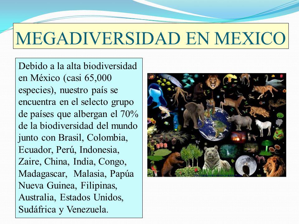 MEGADIVERSIDAD EN MEXICO Debido a la alta biodiversidad en México (casi 65,000 especies), nuestro país se encuentra en el selecto grupo de países que