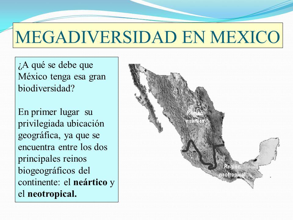 MEGADIVERSIDAD EN MEXICO ¿A qué se debe que México tenga esa gran biodiversidad? En primer lugar su privilegiada ubicación geográfica, ya que se encue