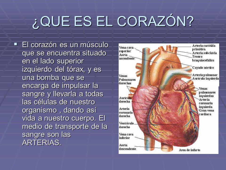 ¿QUE ES EL CORAZÓN? El corazón es un músculo que se encuentra situado en el lado superior izquierdo del tórax, y es una bomba que se encarga de impuls