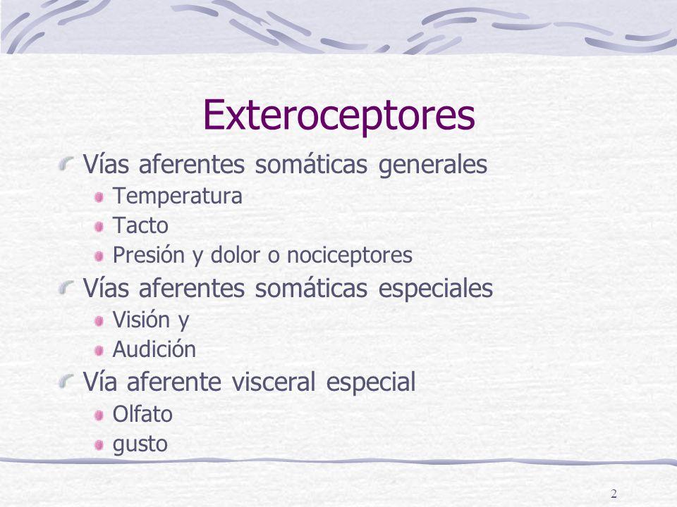 1 Sentidos especiales Terminaciones axonianas Terminacion motoras Músculo esquelético y liso Glandulares o secretoras Terminaciones de Dendritas (aferentes SVge) Exteroceptores Propioceptores Interoceptores Vía aferente visceral general
