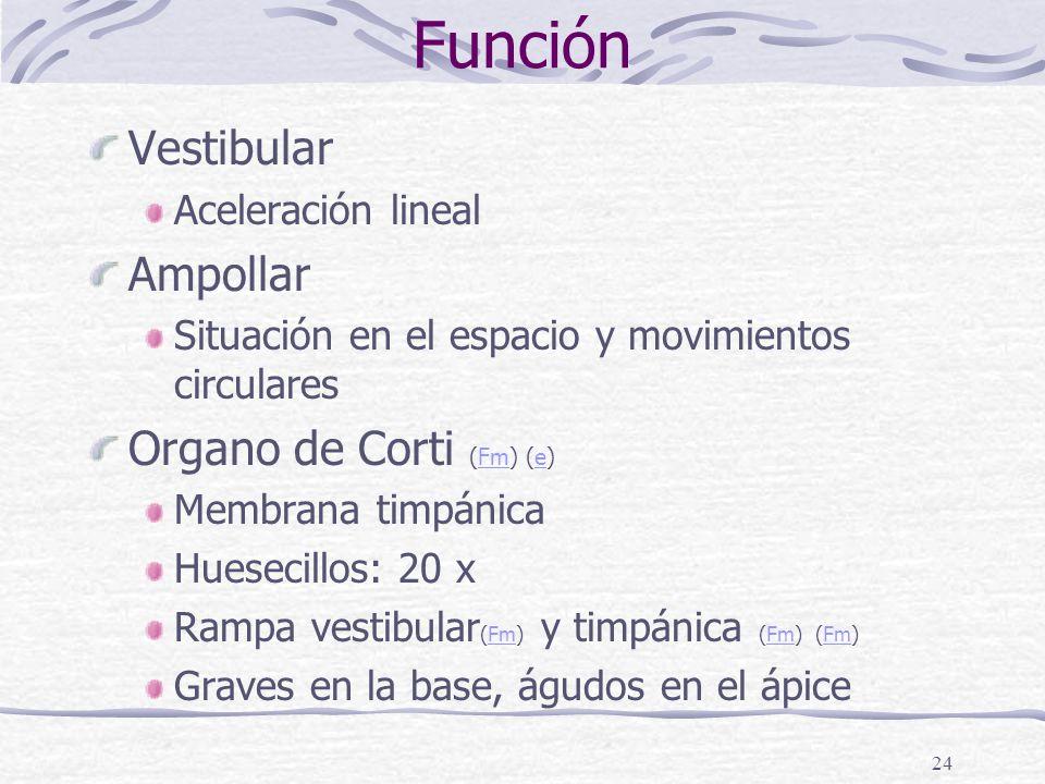23 Oido interno y ganglio espiral (Fm)Fm Máculas del Sáculo y Utrículo (e).