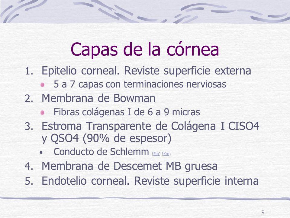 8 Cornea (Km)Km 1/6 anterior Transparente avascular Ligeramente mas gruesa que la esclera 5 capas histológicas Epitelio corneal (Fm)Fm Membrana de Bowman (Fm)Fm Estroma (Fm)Fm Membrana de Descemet (Fm)Fm Endotelio corneal (Fm)Fm