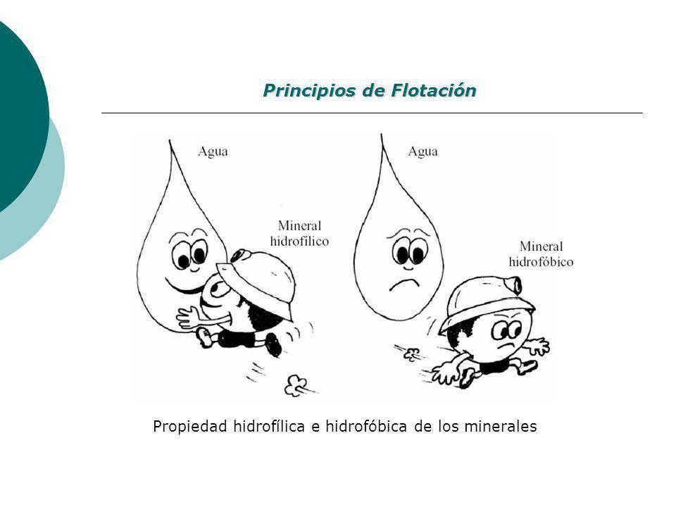 Propiedad hidrofílica e hidrofóbica de los minerales Principios de Flotación