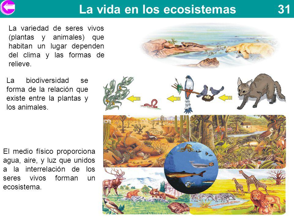La vida en los ecosistemas 31 La variedad de seres vivos (plantas y animales) que habitan un lugar dependen del clima y las formas de relieve. La biod