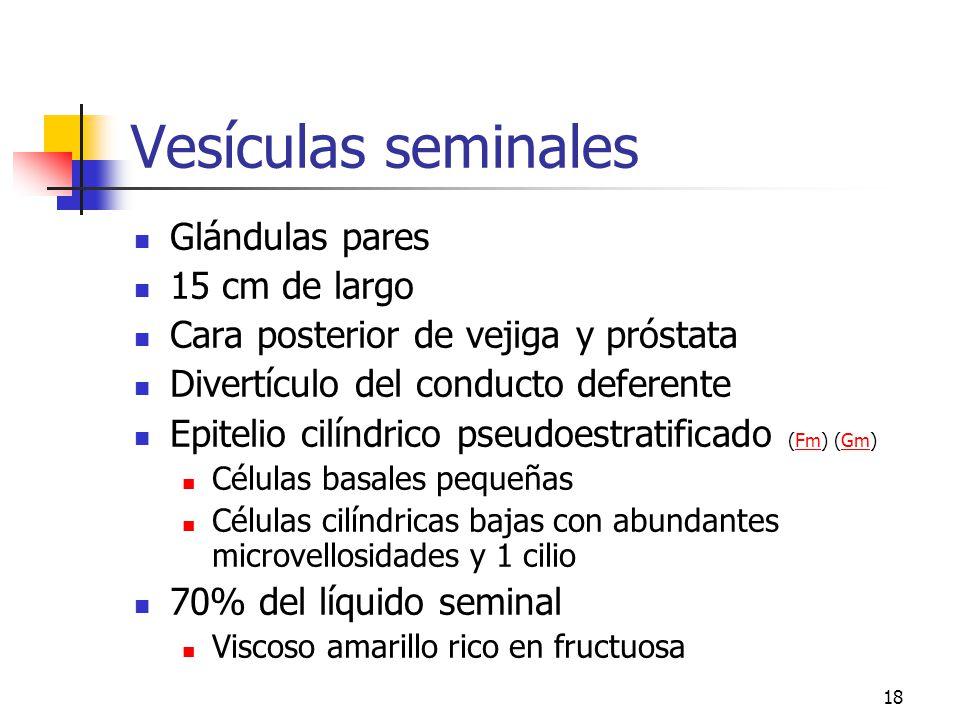 17 Conductos extra testiculares 1. Epidídimo (Ge) (Jm) (Fm) (Gm)GeJmFmGm Conductillos eferentes: 10 a 20 E cúbico y cilíndrico ciliado Conducto del Ep