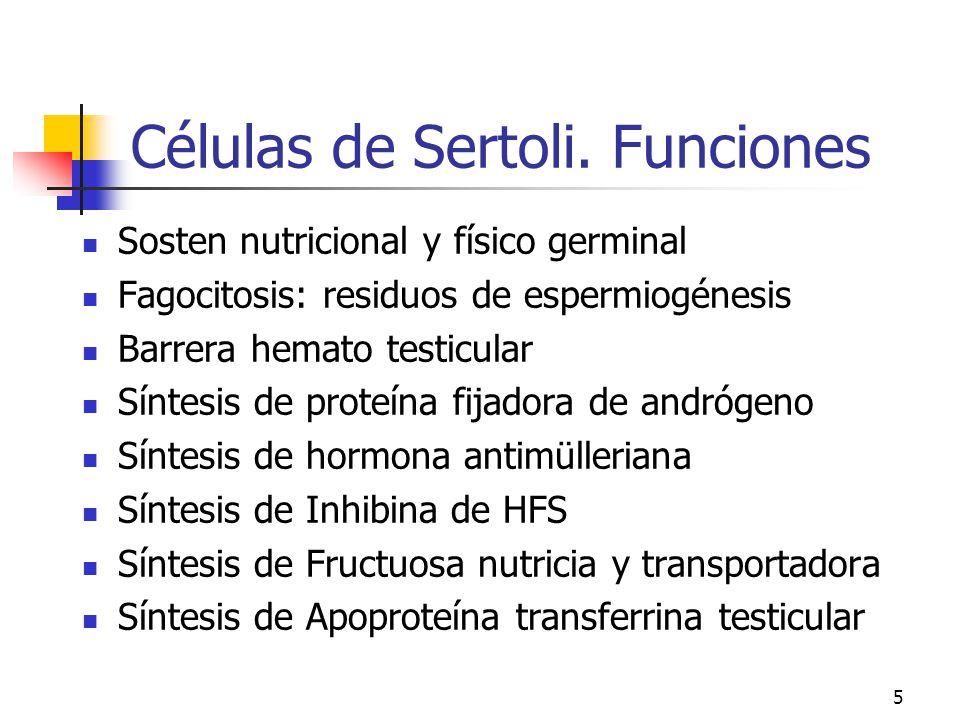 4 Células de Sertoli (e) (fm)efm Cilíndricas altas c/plegaduras laterales Núcleo basal, gran nucleolo central Cristaloides de Charcot-Bottchen 1.