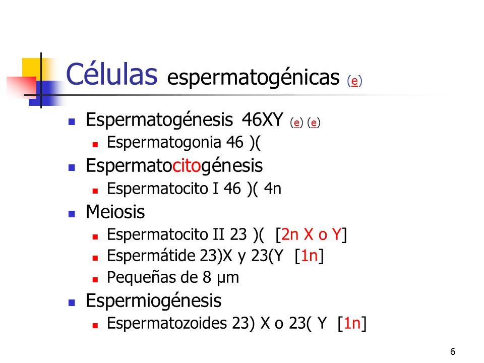 5 Células de Sertoli. Funciones Sosten nutricional y físico germinal Fagocitosis: residuos de espermiogénesis Barrera hemato testicular Síntesis de pr