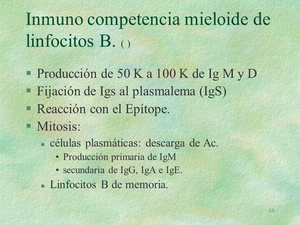 15 Isotipos de Ig por la cadena Pesada o H (c)c §IgG. Eficaz y abundante. Monomérica. §IgA. Secretora. Dimérica. §IgM. Primaria. Pentamérica. §IgD. Ig