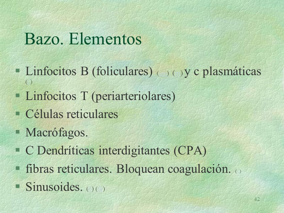 41 Bazo (e)e §El mayor órgano linfoide §capacitación inmunológica §formación de Ac §Producción de Linfocitos T y B §Hemocateresis y eliminación de Plaquetas (t)t §Hematopoyesis Fetal §Reservorio de Eritrocitos (No en el hombre)