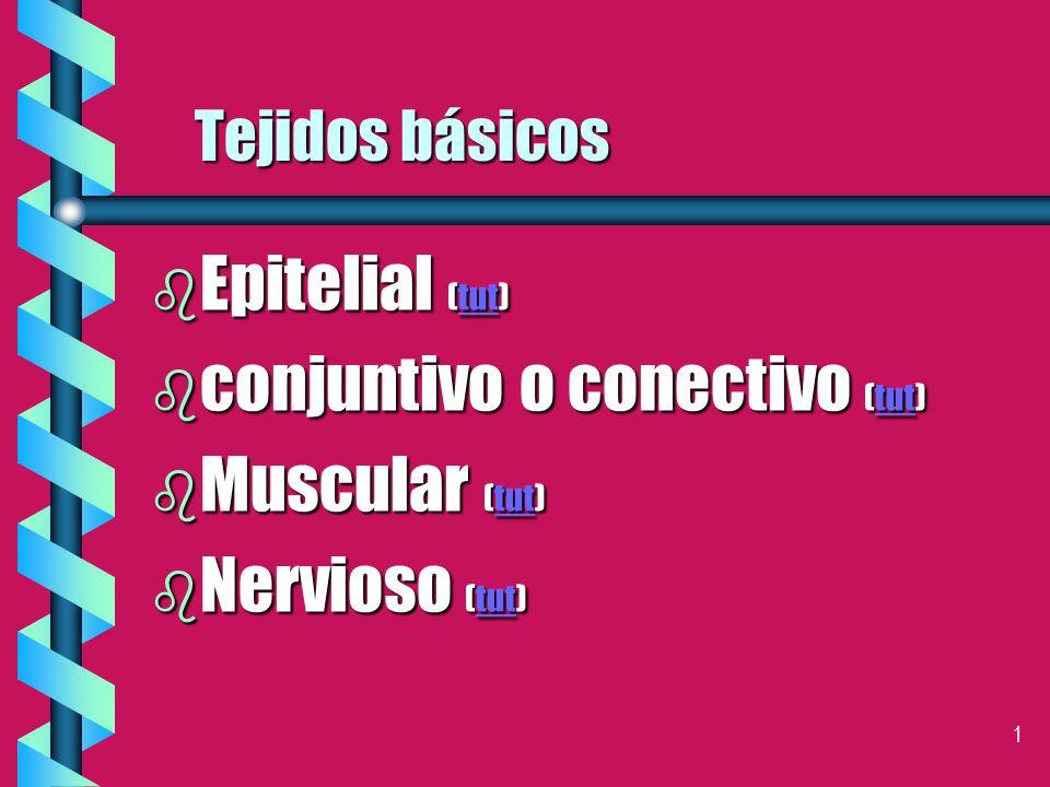 1 Tejidos básicos b Epitelial (tut) tut b conjuntivo o conectivo (tut) tut b Muscular (tut) tut b Nervioso (tut) tut