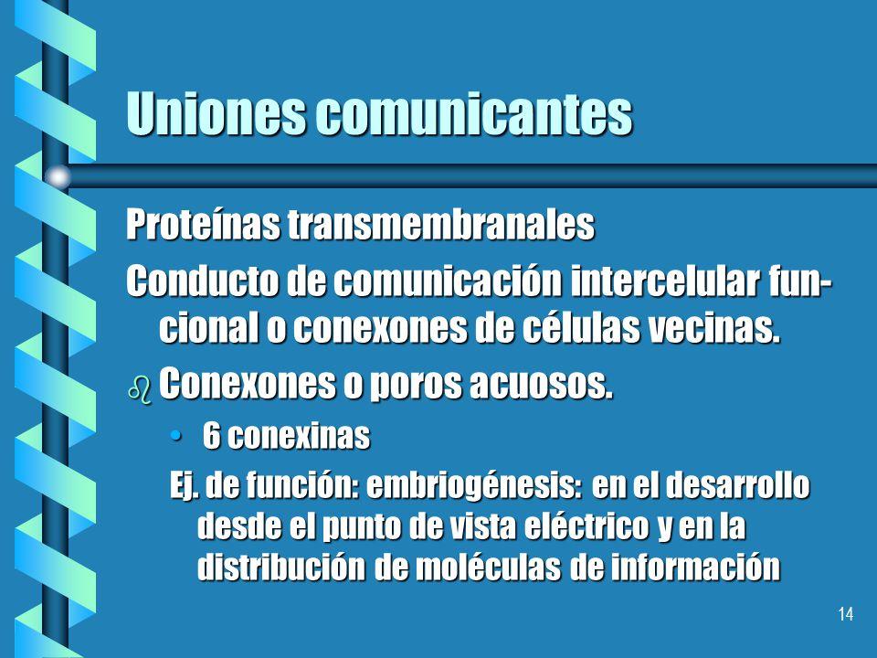 13 Uniones comunicantes.Nexos.