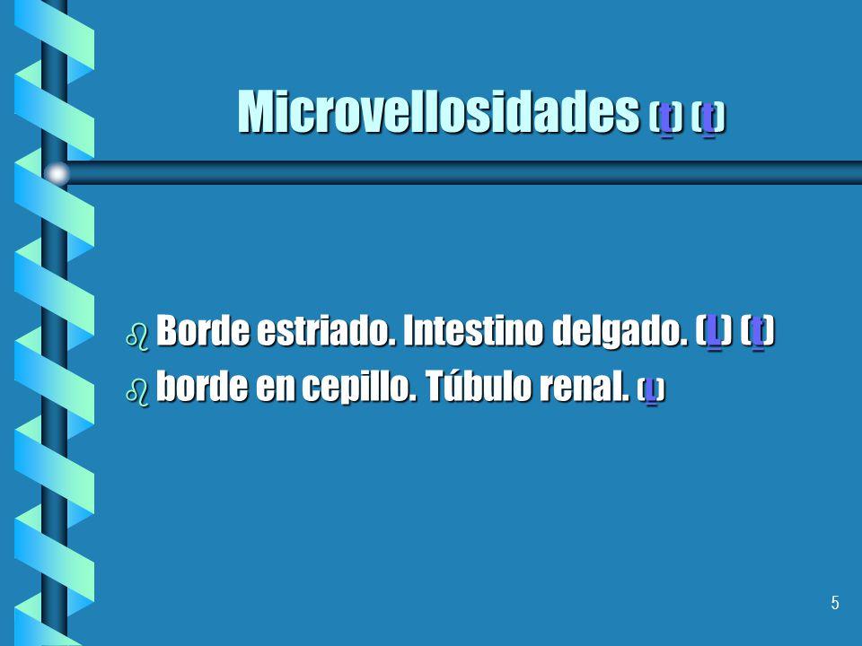4 Polaridad y especialización b Dominio apical. Microvellosidades, (T) estereocilios (L) y cilios TLTL b dominio baso lateral.