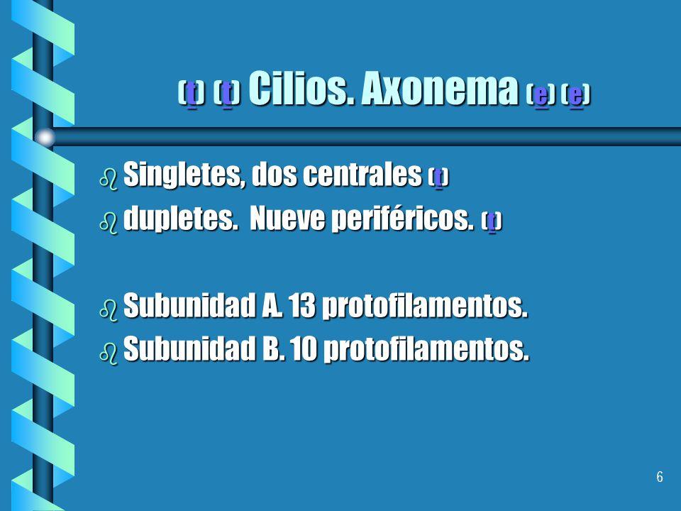 6 (t) (t) Cilios.Axonema (e) (e) (t) (t) Cilios.