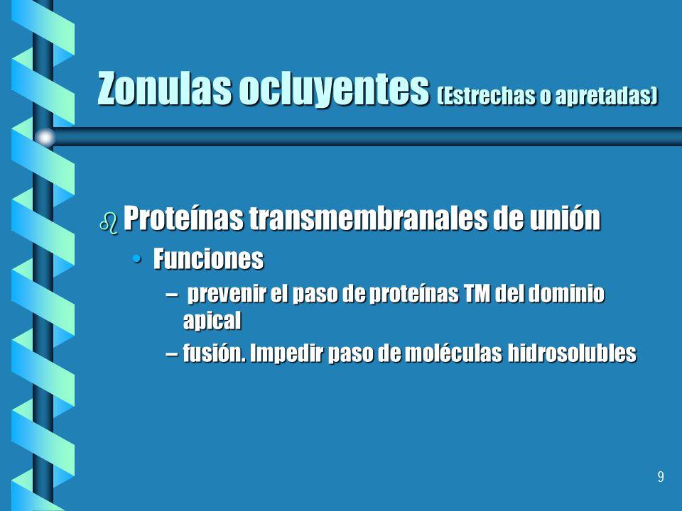 9 Zonulas ocluyentes (Estrechas o apretadas) b Proteínas transmembranales de unión FuncionesFunciones – prevenir el paso de proteínas TM del dominio apical –fusión.