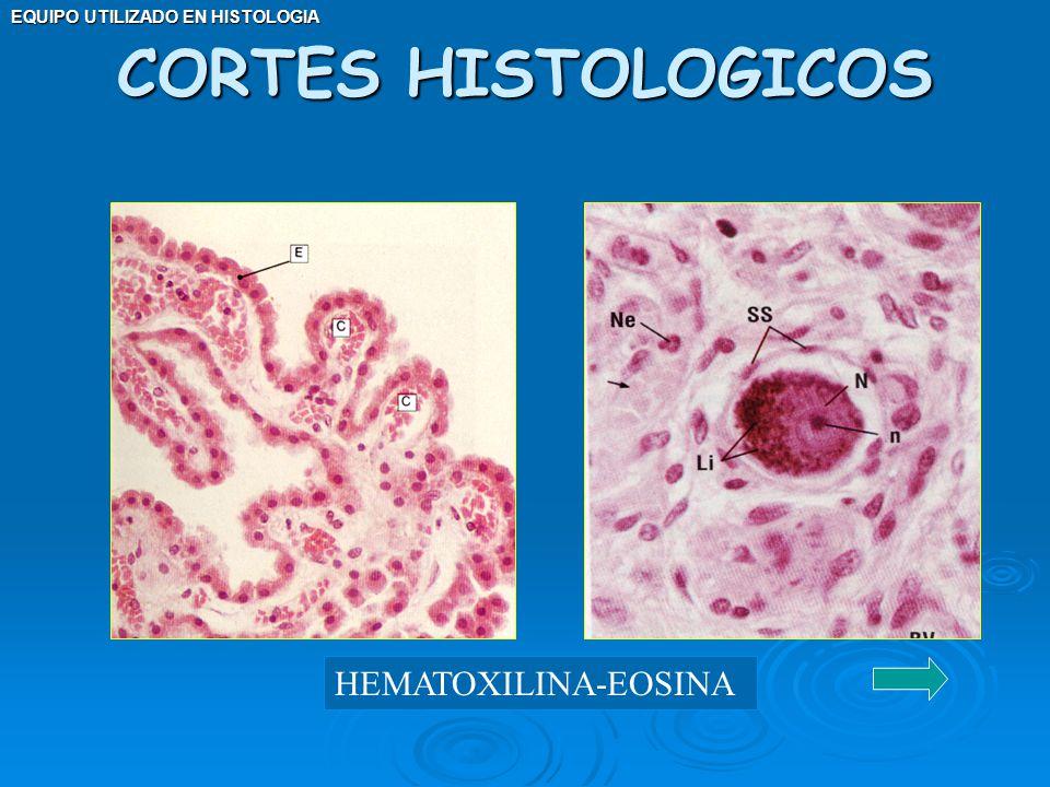 EQUIPO UTILIZADO EN HISTOLOGIA CORTES HISTOLOGICOS HEMATOXILINA-EOSINA
