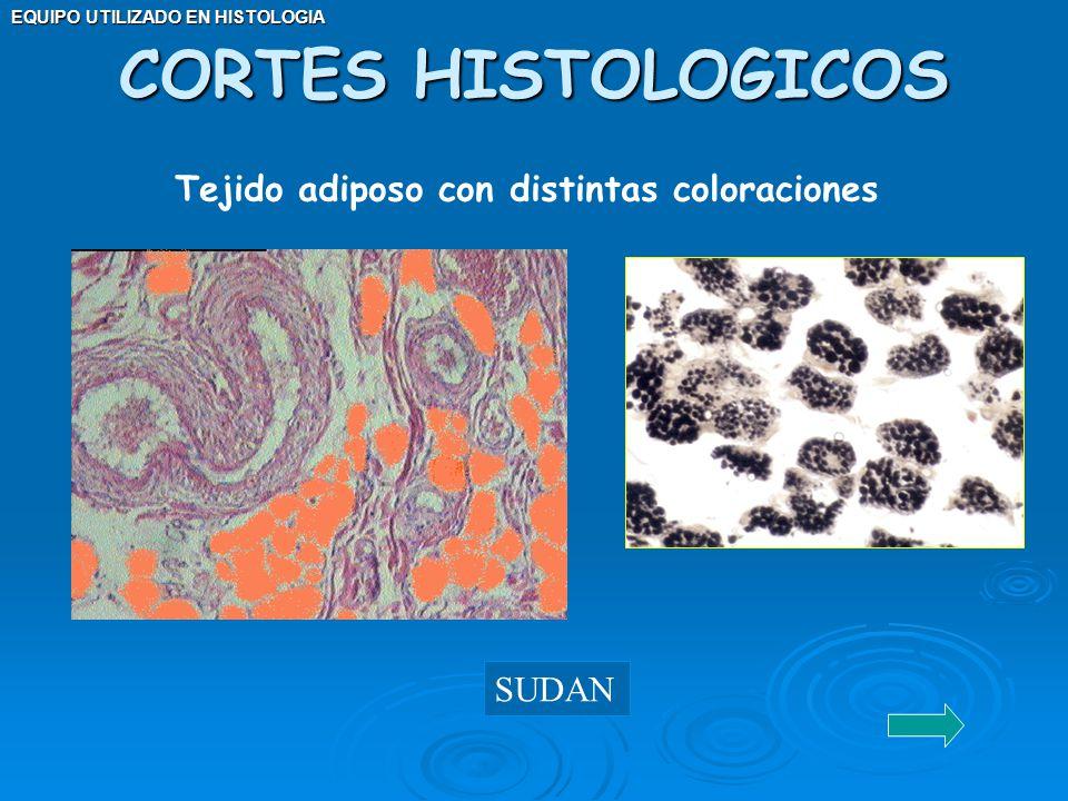 EQUIPO UTILIZADO EN HISTOLOGIA CORTES HISTOLOGICOS SUDAN Tejido adiposo con distintas coloraciones