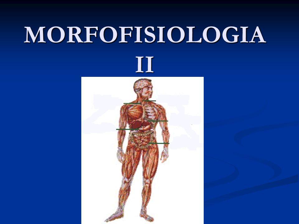 Generalidades del cuerpo humano y del sistema osteomioarticular 1.1.