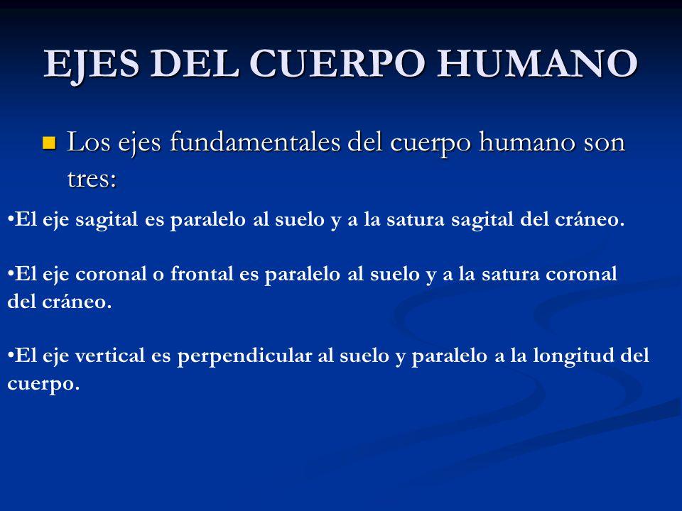 EJES DEL CUERPO HUMANO Los ejes fundamentales del cuerpo humano son tres: Los ejes fundamentales del cuerpo humano son tres: El eje sagital es paralel