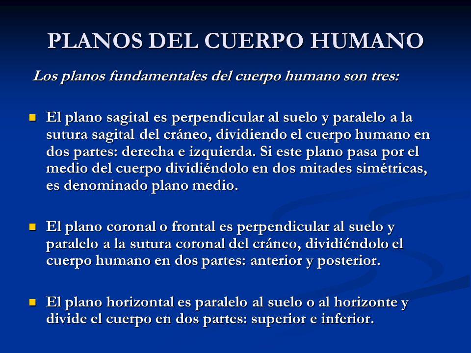 PLANOS DEL CUERPO HUMANO Los planos fundamentales del cuerpo humano son tres: Los planos fundamentales del cuerpo humano son tres: El plano sagital es