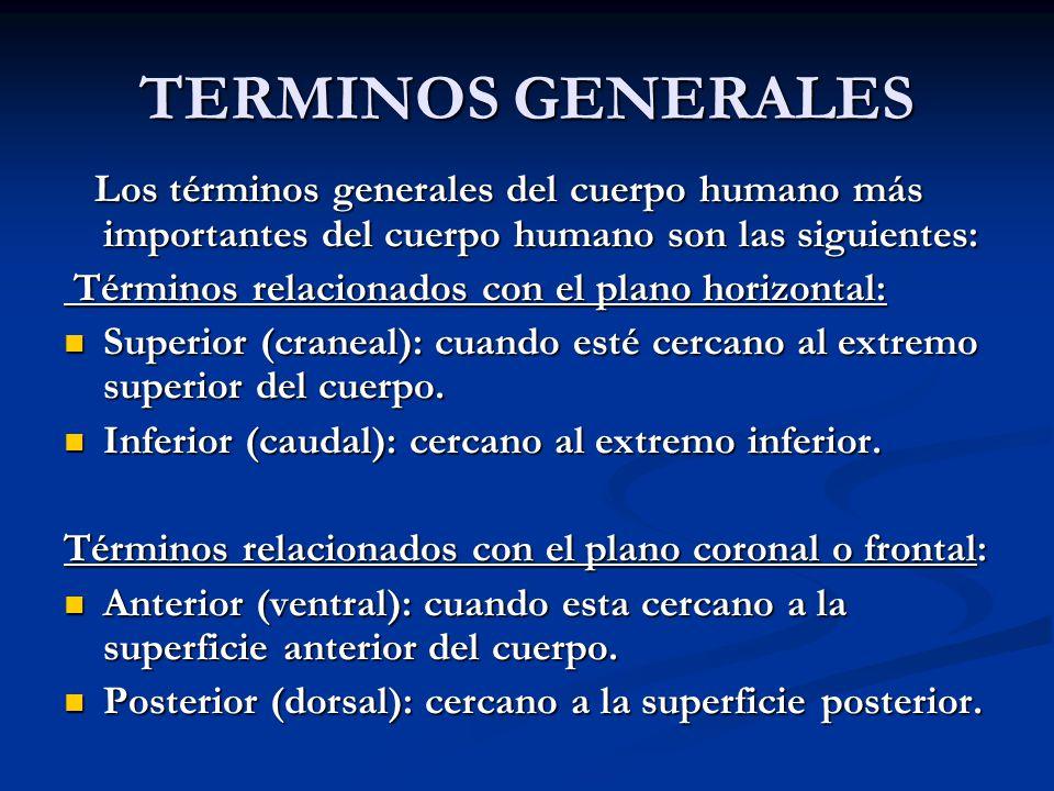 TERMINOS GENERALES Los términos generales del cuerpo humano más importantes del cuerpo humano son las siguientes: Los términos generales del cuerpo hu