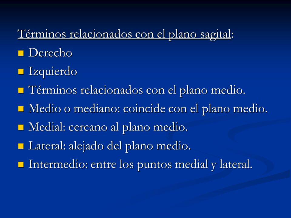Términos relacionados con el plano sagital: Derecho Derecho Izquierdo Izquierdo Términos relacionados con el plano medio. Términos relacionados con el