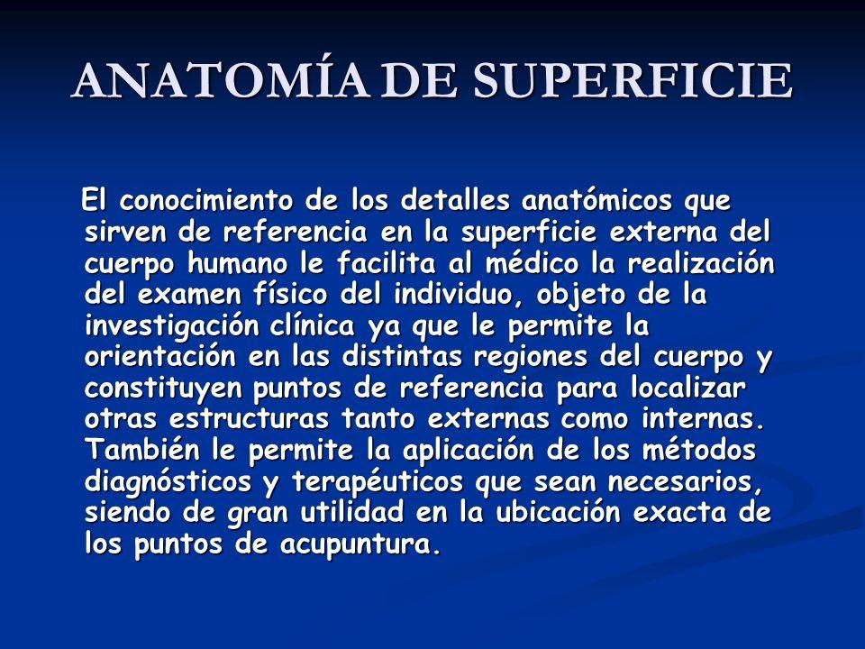 ANATOMÍA DE SUPERFICIE El conocimiento de los detalles anatómicos que sirven de referencia en la superficie externa del cuerpo humano le facilita al m