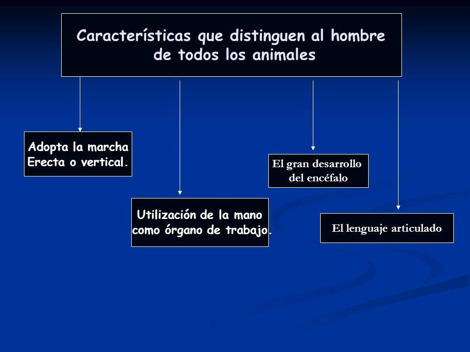 1.2 TERMINOLOGÍA MORFOLÓGICA IMPORTANCIA DE LA TERMINOLOGÍA MOFOLÓGICA La terminología morfológica es el conjunto de términos técnicos empleados para designar las estructuras que componen el organismo.