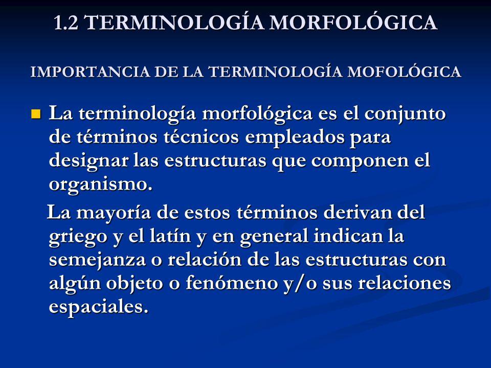 1.2 TERMINOLOGÍA MORFOLÓGICA IMPORTANCIA DE LA TERMINOLOGÍA MOFOLÓGICA La terminología morfológica es el conjunto de términos técnicos empleados para