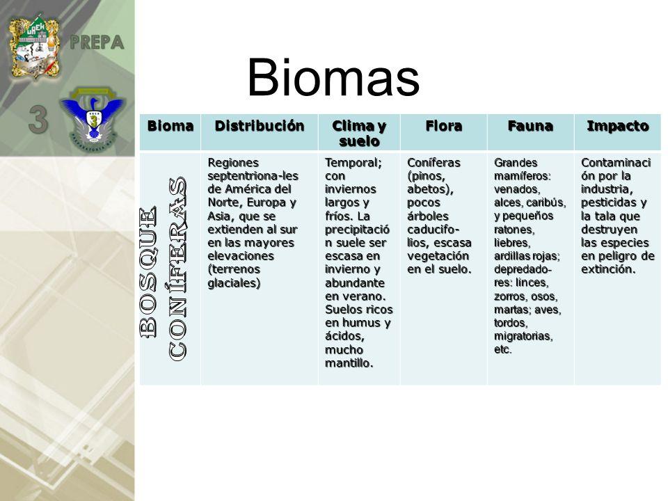 BiomasBiomaDistribución Clima y suelo FloraFaunaImpacto Ocupa el 1% de la superficie de la tierra y se encuentra ubicada en América del Norte, de Europa y de Asia.