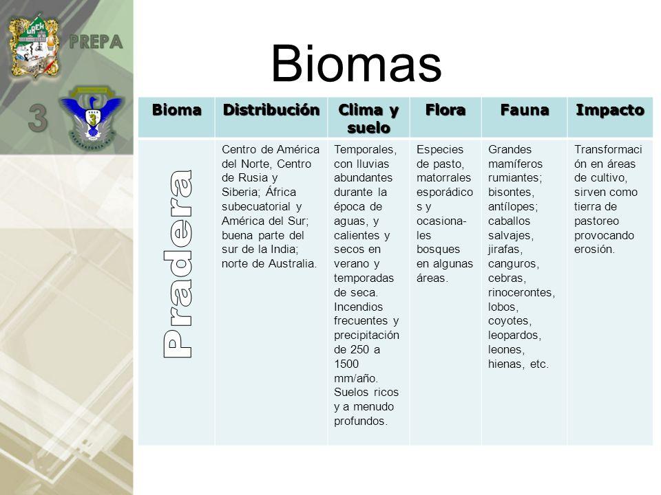 BiomasBiomaDistribución Clima y suelo FloraFaunaImpacto Norte de América del sur; América Central, oeste y centro del África ecuatorial; sureste de Asía; varias islas en los océanos Indico y Pacífico.