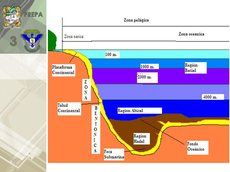 *La circulación atmosférica y la rotación terrestre crean las corrientes marinas, que participan en la distribución de nutrientes y gases.