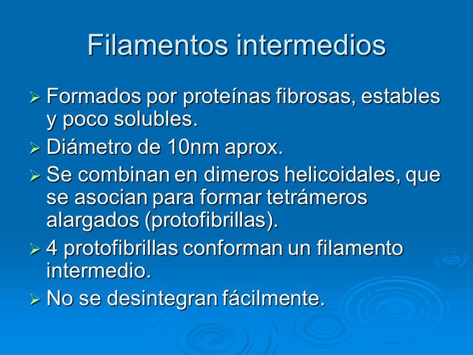Filamentos intermedios Formados por proteínas fibrosas, estables y poco solubles. Formados por proteínas fibrosas, estables y poco solubles. Diámetro