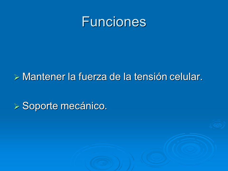 Funciones Mantener la fuerza de la tensión celular. Mantener la fuerza de la tensión celular. Soporte mecánico. Soporte mecánico.